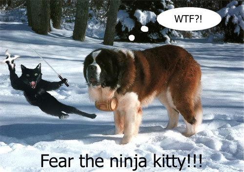 Name:  ninjakitty.jpg Views: 276 Size:  54.5 KB