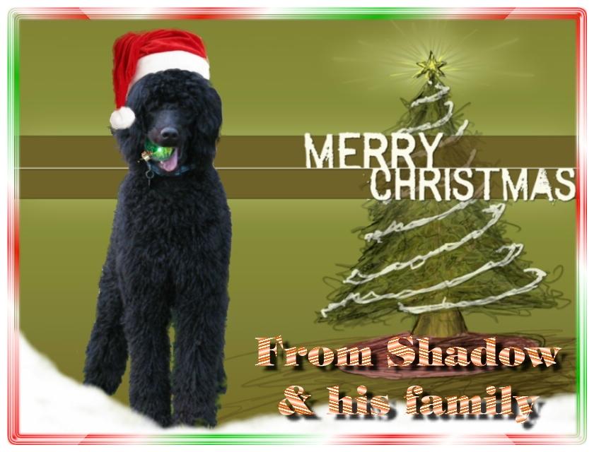 Name:  shadow-christmas-card-3.jpg Views: 1808 Size:  291.5 KB